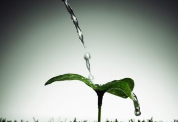 plant being watered
